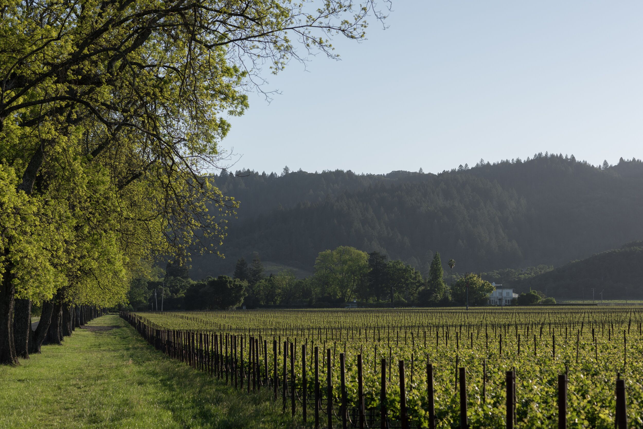 Beckstoffer To Kalon Vineyard