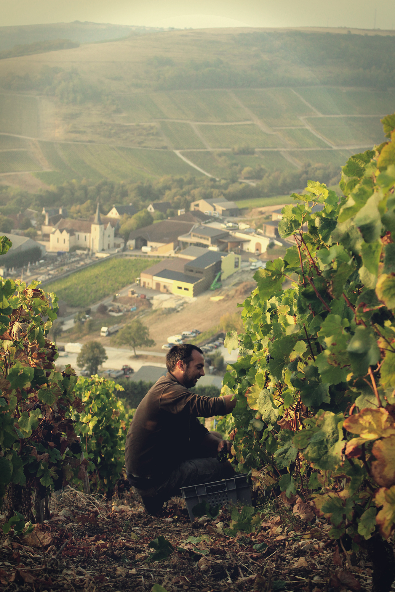 A the top of La Côte des Monts Damnés during the 2018 harvest