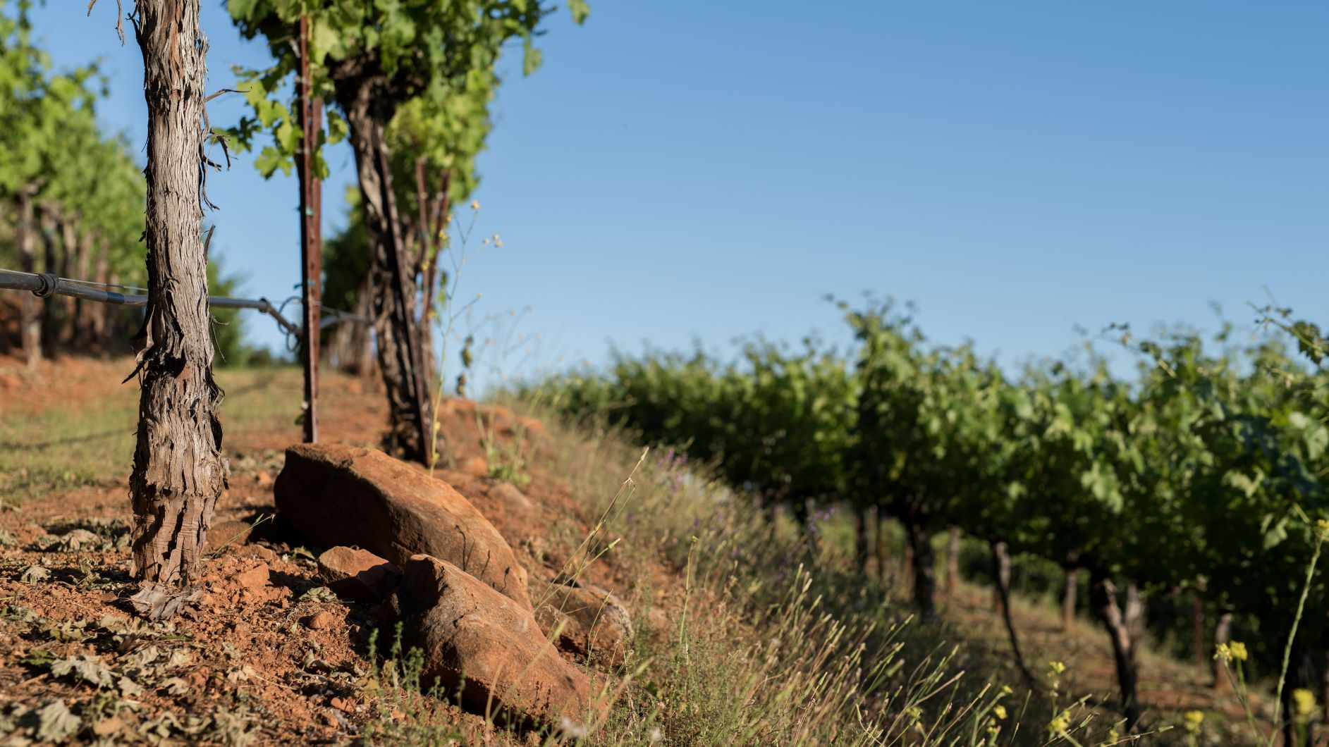 Large red rocks throughout Tierra Roja Vineyard